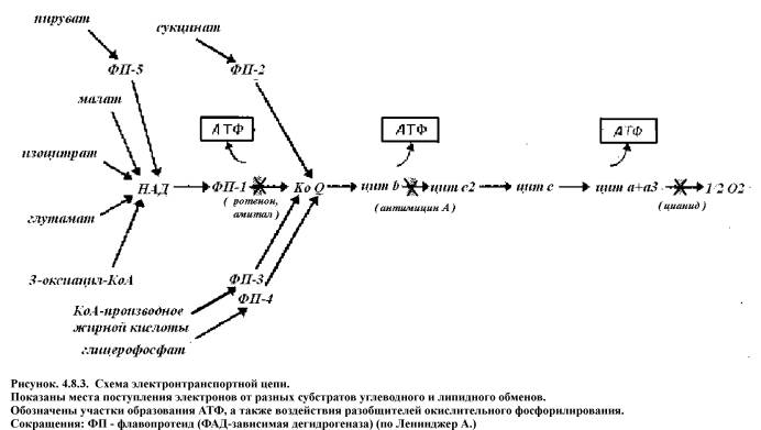 Index of /books/book/Biochemistry/chapter_08 files